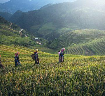 La agricultura también puede ser un buen negocio emergente