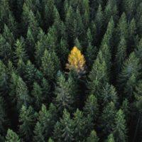 ESG: identificando las métricas que más importan