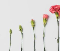 ¿Cómo hacer que se consoliden las transformaciones empresariales?